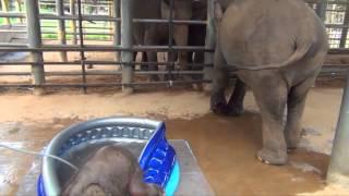 elephant like water