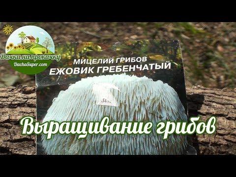 выращивание грибов эноки