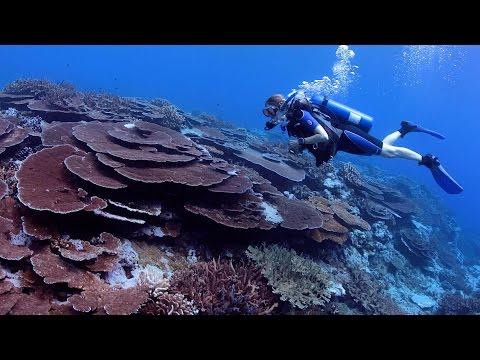 Fagatele Bay - National Marine Sanctuary of American Samoa