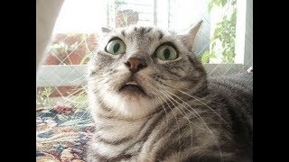 Самые ржачные коты  Крутая подборка!