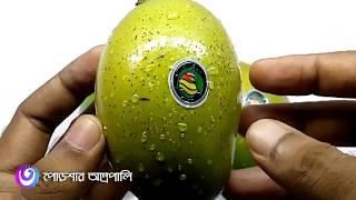 বাংলাদেশের সেরা ১০ আম ।। Top Ten Mango in Bangladesh