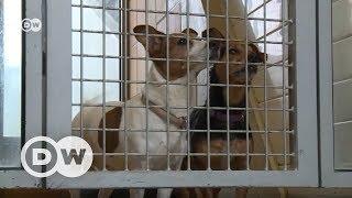 Ev Hayvanlarının Noel Hediyesi Olmaması Için önlem - Dw Türkçe