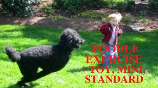 Poodle Exercise Guide [Toy, Mini, Standard]