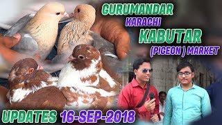 Guru Mandir Kabooter Pigeons  Market 16-9-2018 Updates (Jamshed Asmi Informative Channel) Urdu/Hindi