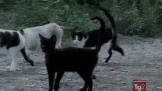 Итальянский кот - миллионер