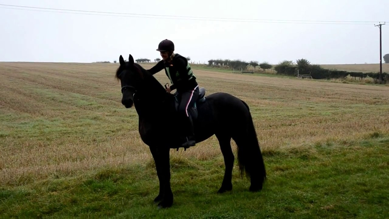 Friesian Horse Koning's first jumps, on the cross country ...