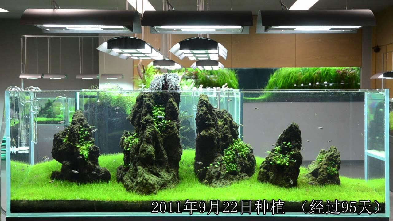 Aquarium Simple Design