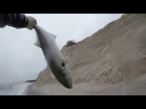 Blue Fish Blitz In Long Island