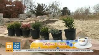 видео Агротехника хвойных растений