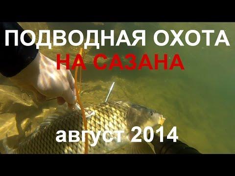 рыбалка на сазана квх