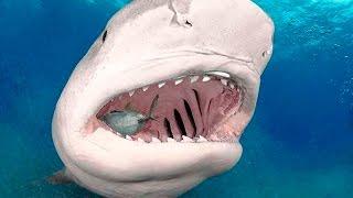 Pesca de Gigantes - Monstros na África do Sul