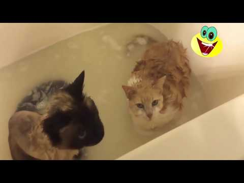 Cats Hate Water! - Funny Cats in Water Compilation 2017
