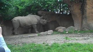 Saint Louis Zoo: The Rhino Strikes Back