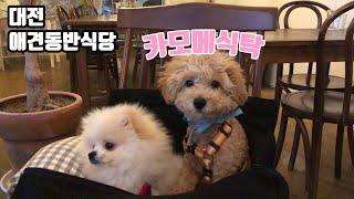 대전 애견동반식당 '카모메식탁' 에 다녀…
