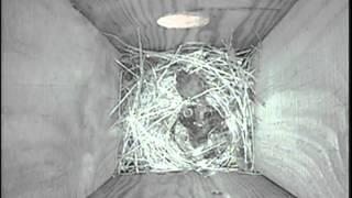 Wrens Feeding Babies June 2, 2014