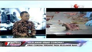 Download Terkuak! Pakar Patologi Temukan Virus Corona Pada Kelelawar Buah