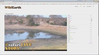 WE investigate the safariLIVE zoomies! thumbnail