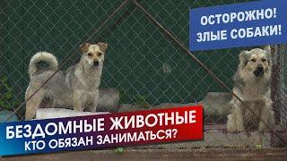 Мертвая собака на детской площадке. Почему нет службы по отлову безнадзорных животных │06.07.2019