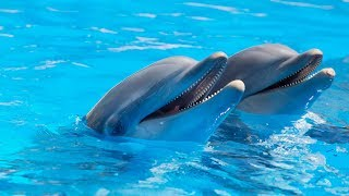 Кирилловка! Дельфинарий