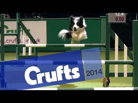 Agility | Kennel Club British Open | Jumping | Crufts 2014