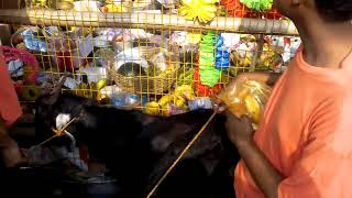 2018 Harindanga rakha  kali puja diamond harbour part-1 (time of pathaboli)