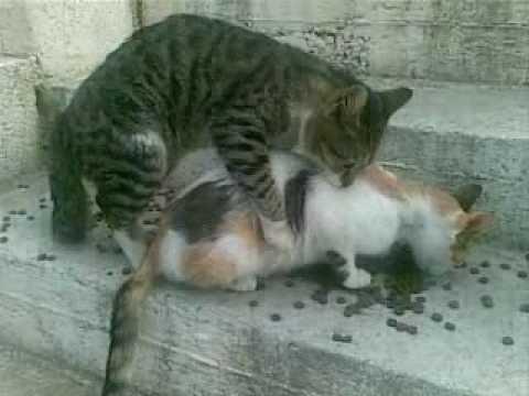 cat-mating-fail