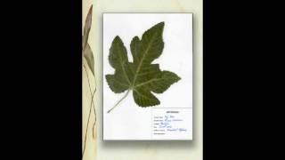 Presentación Herbario Comenius