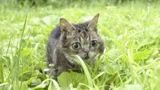 BUB in the GRASS