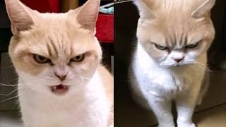 фото приколы! Подборка смешных кошек и котов!