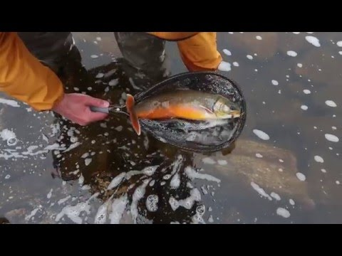 Learn to fly fish with drugge and markoolio english su for Learn to fly fish