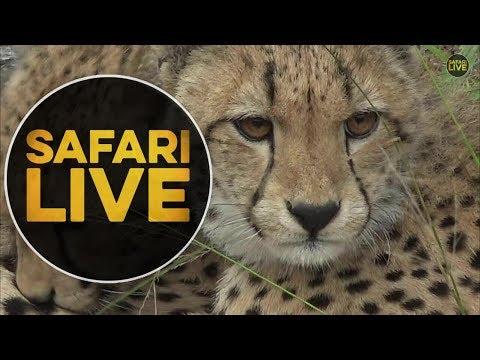 safariLIVE - Sunrise Safari - May 21, 2018