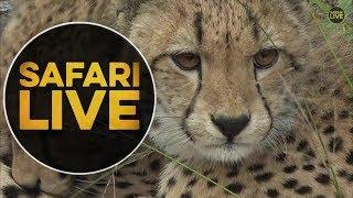 safariLIVE - Sunrise Safari - May, 21. 2018 thumbnail