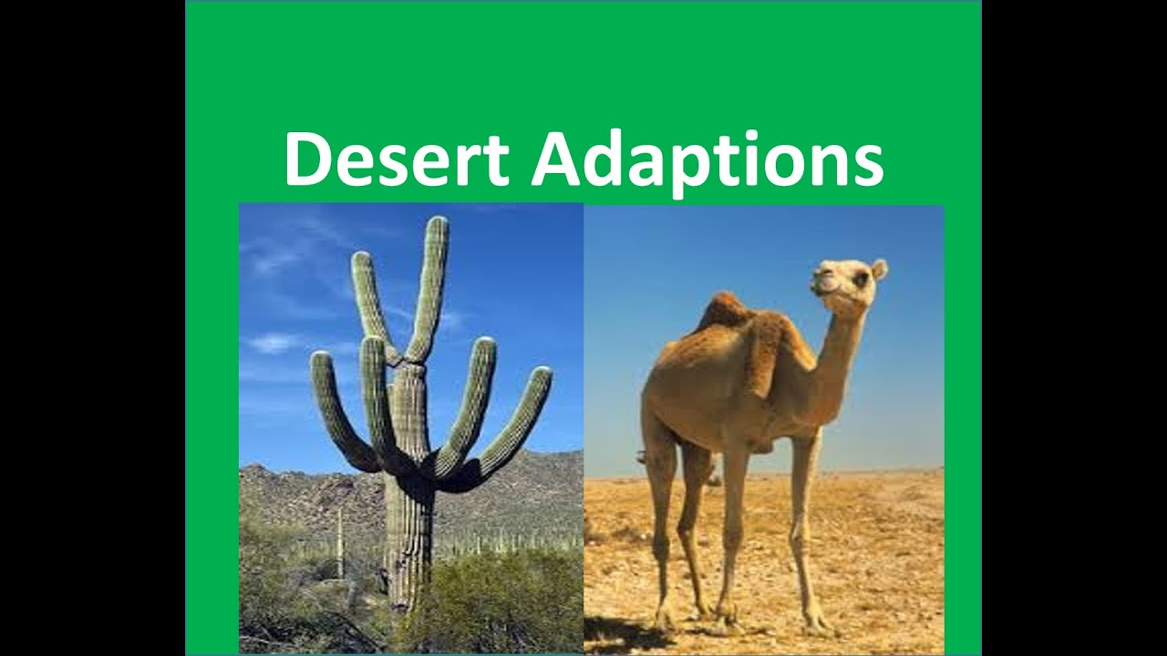 Desert Plants and Animals adaptations -For Kids - YouTube