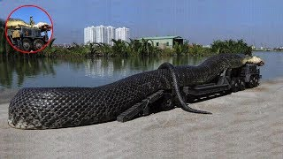 Download 7 Biggest Snakes Ever Found