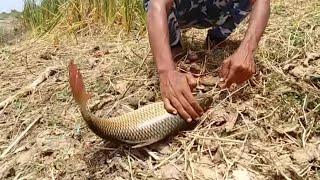 Fish hunting||Fishing for big rohu fish