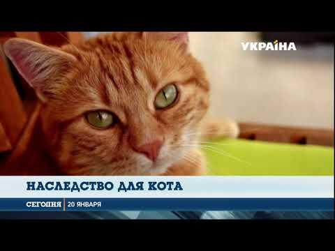 В Италии кот получил наследство от своей хозяйки