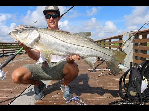 Giant Juno Pier Snook Fishing! 2016
