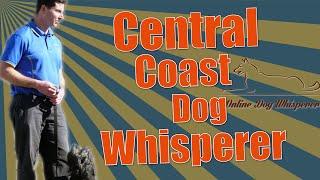 Dog Whisperer Central Coast Nsw Australia - Dog Training Programs Online