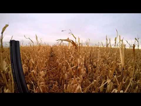 SoDak Pheasant Hunt with GoPro Aerial Drone in South Dakota