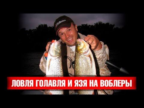 Ловля голавля и язя на воблеры. Рыбалка на Оке. Mottomo Ligero, Crasher и Chubber