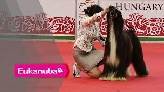 World Dog Show 2013 - Group X Judging
