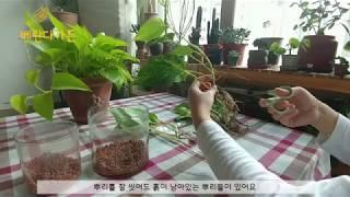 [베란다가든]건조함을 이기는 실내 화초 천연가습기 식물…