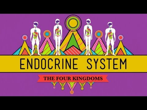 Great Glands - Your Endocrine System: CrashCourse Biology #3