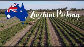 HARTE ARBEIT! | Work and Travel Australien | Zucchini Picking Vlog #5