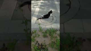 Милый кот с больным хвостом. Cute cat with a sick tail. Katzen. Gatos. Kucing. Neko.