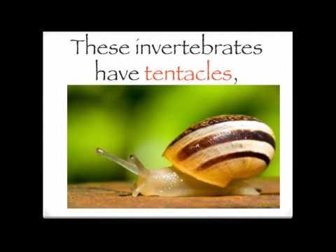 The invertebrates song