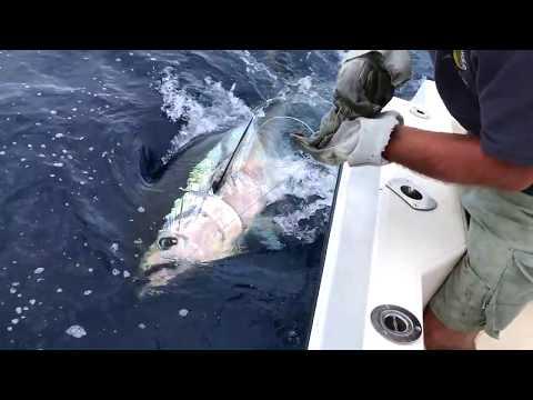 Tenerife Ocean Fishing For Blue Tuna  2017 Aprile
