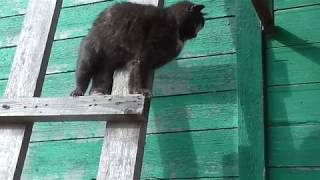 Мартовские коты  на даче  March cats in the country