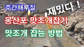 주간해루질 몽산포 맛조개잡기  맛조개잡는 방법