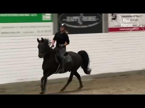 Pascal 9yo pony